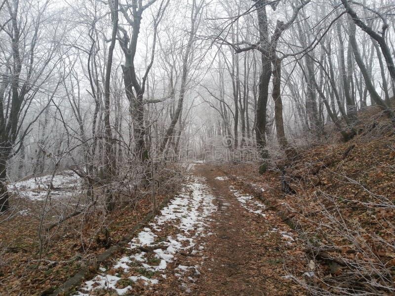 Bois russes d'hiver images stock