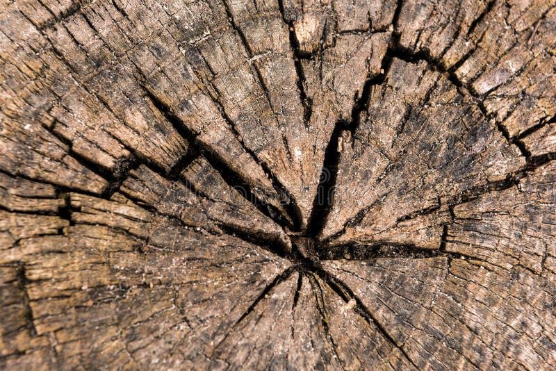 Bois scié par circulaire détaillé photos stock