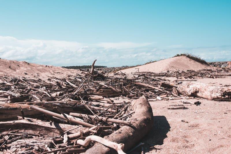 Bois sur la plage dans un jour ensoleillé avec le ciel bleu image stock
