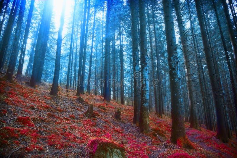 Bois surréalistes sombres avec les lumières et la mousse rouge, conte de fées magique s images stock