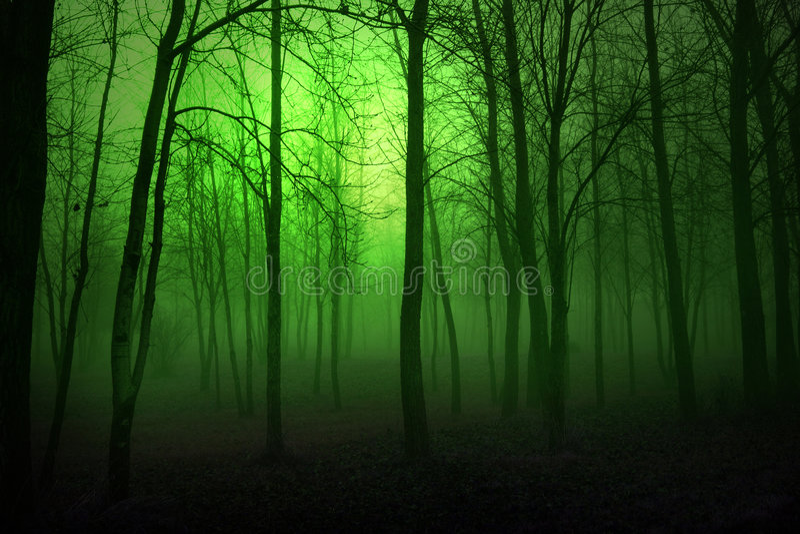 Bois verts image stock
