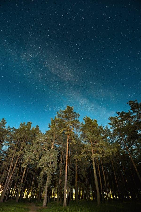 Bois verts d'arbres en parc sous le ciel étoilé de nuit avec la galaxie de manière laiteuse image libre de droits