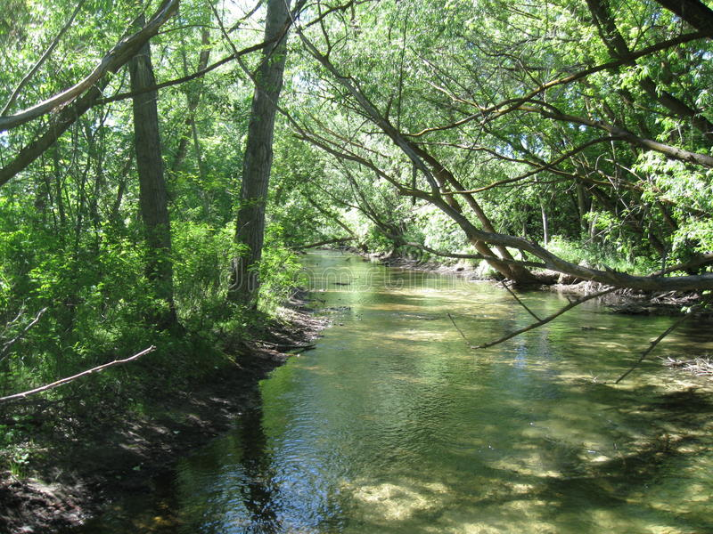 Download Boise River Sunlight Filtered Through Trees Stock Photo - Image: 82200932
