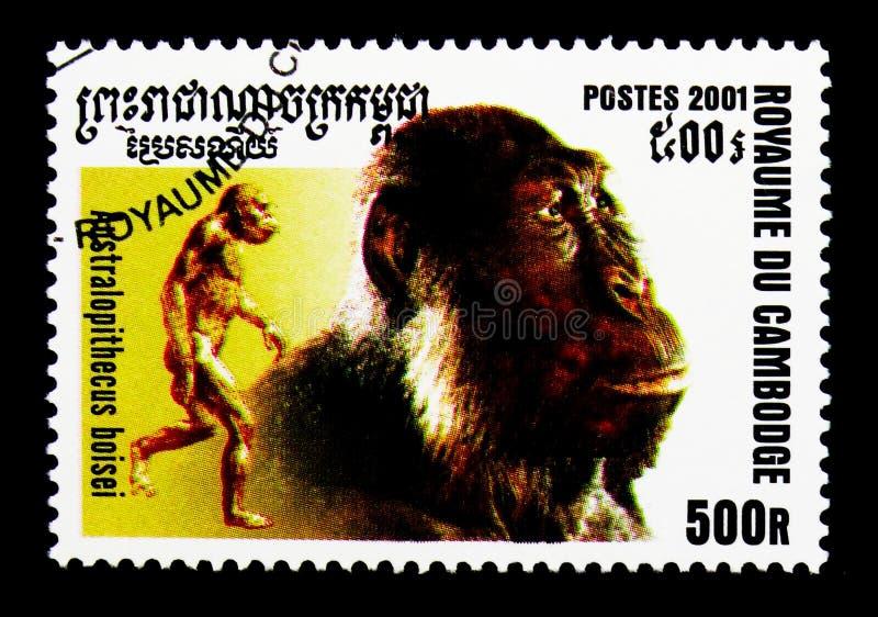 Boisei dell'australopiteco, evoluzione del serie dell'umanità, circa 2001 immagini stock