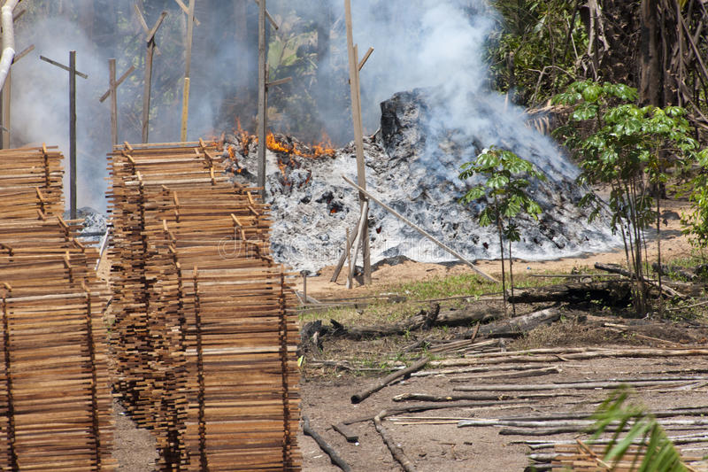 Boisez le commerce en brûlant la jungle au Brésil image libre de droits
