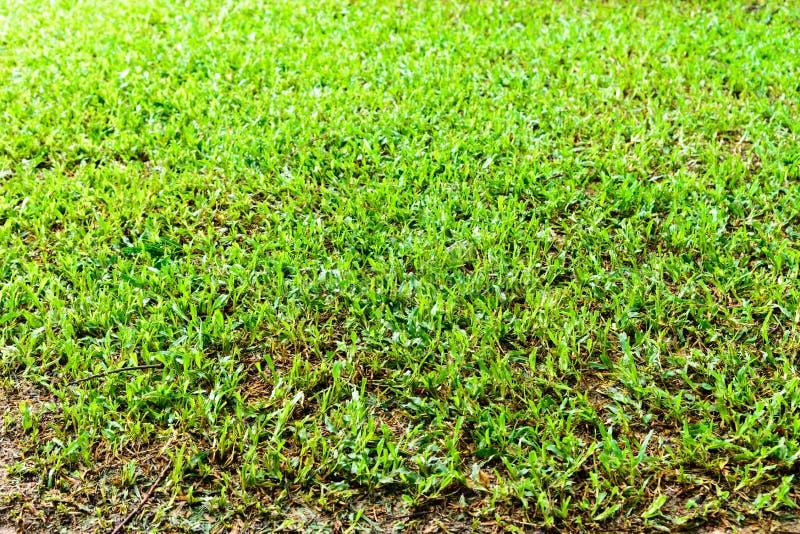 boisko gazonu Zielony wzór, Zielonej trawy naturalny tło obraz stock