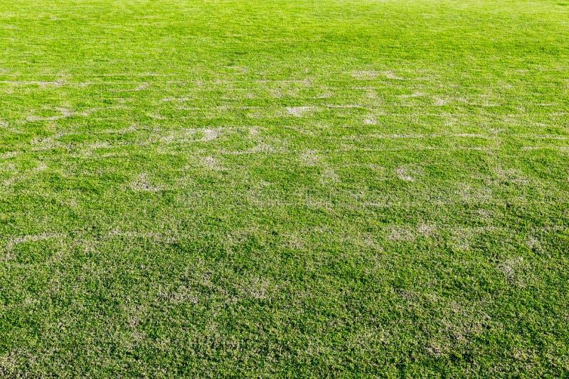 boisko, Zielony gazon, wysuszona trawy tekstura, zieleń i światło, zdjęcie royalty free
