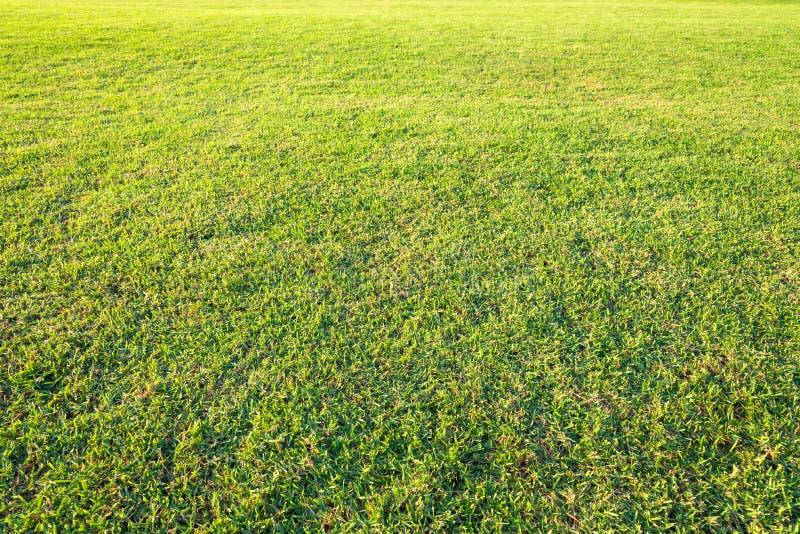 boisko, Zielony gazonu wzór, Zielonej trawy naturalny tło obrazy stock