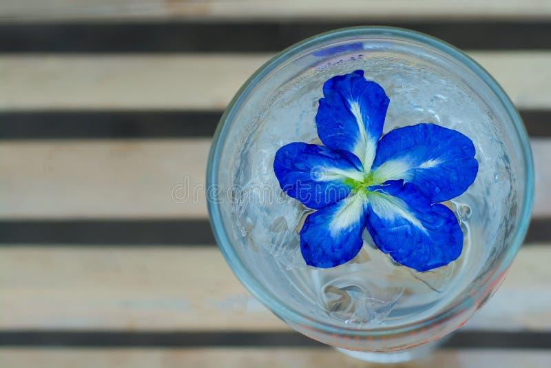Boisson de l'eau de fleur de pois photo stock