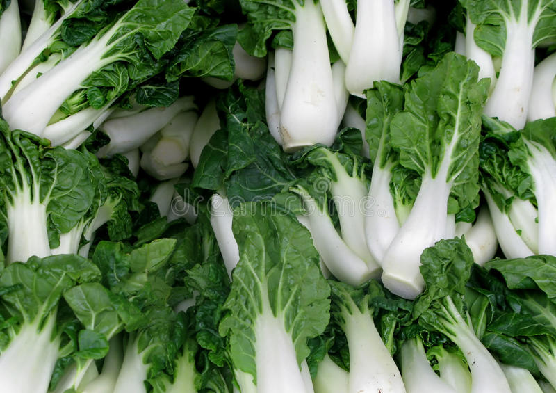 Bok choy. Green bok choy close up royalty free stock image