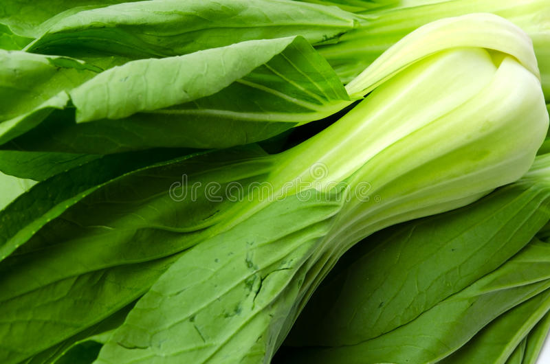 Bok choy. Cooking ingredient series bok choy. for adv etc. of restaurant,grocery,and others stock photography