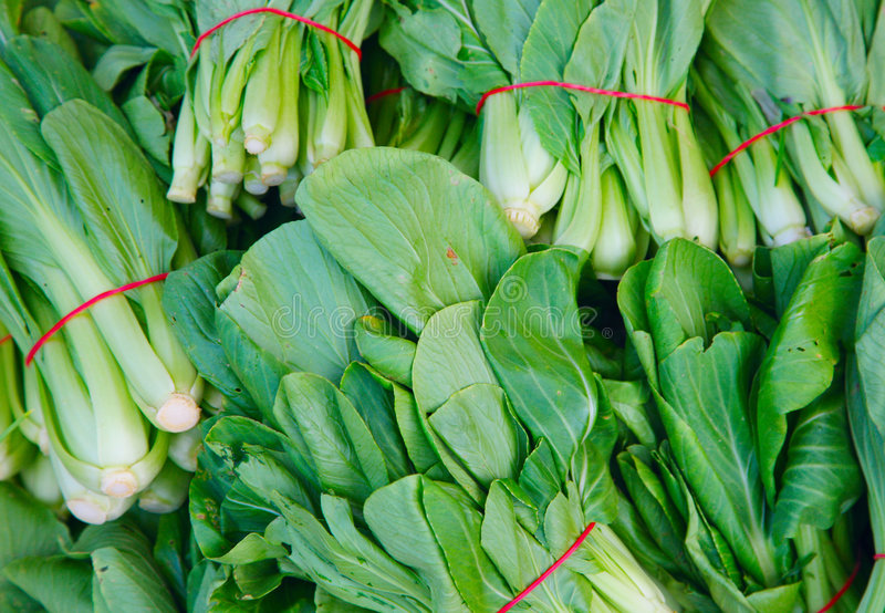 Bok choy. A marco photo of bok choy stock image