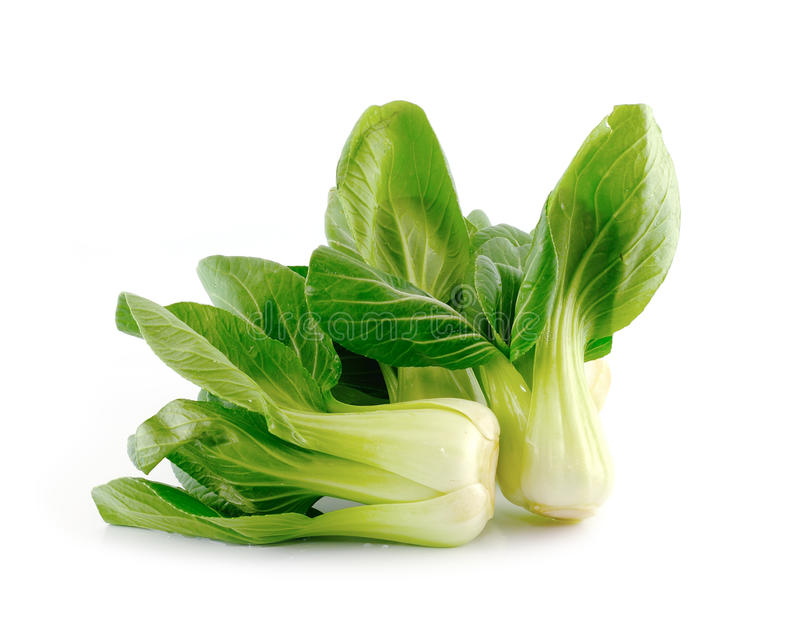 Bok choy (chinese cabbage) royalty free stock photography
