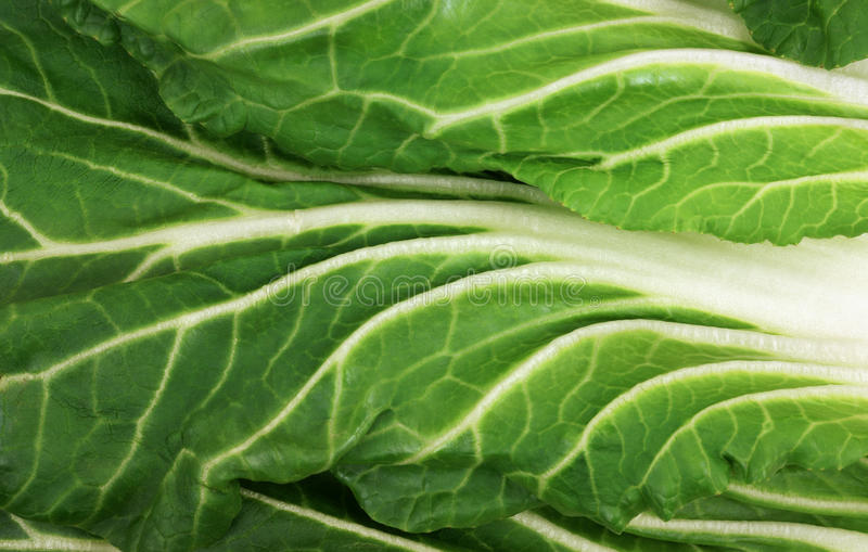 Download Bok Choy Grained Leaves stock photo. Image of grained - 12969052