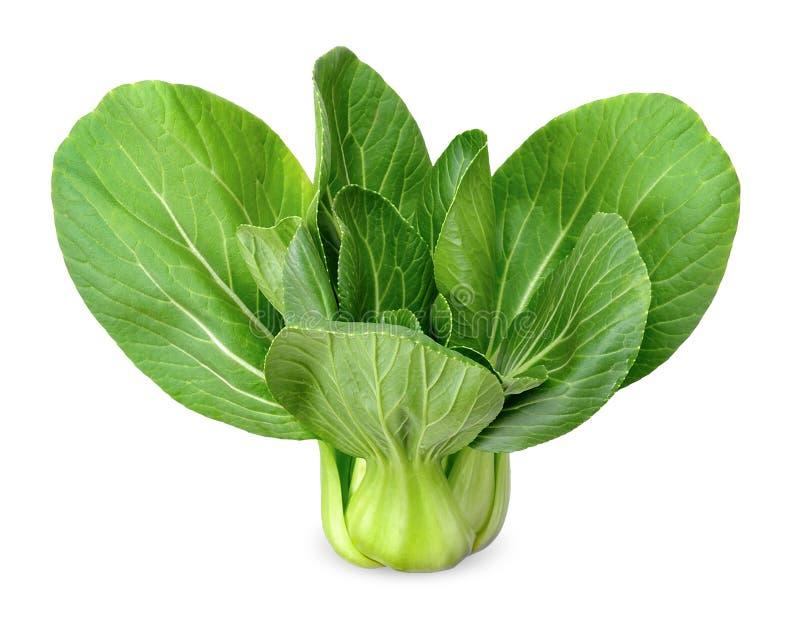 Bok choy groente geïsoleerde het knippen weg stock afbeelding