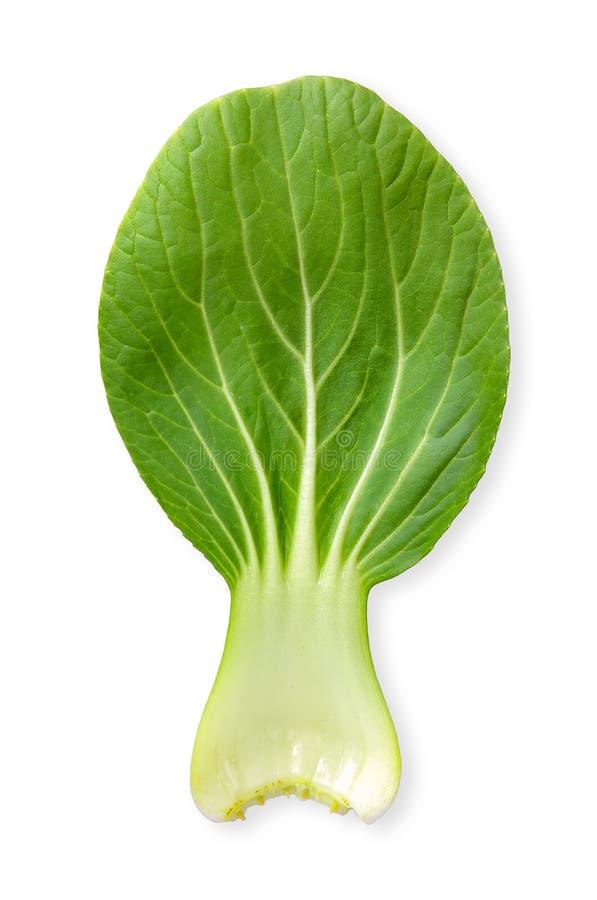 Bok choy groente geïsoleerde het knippen weg royalty-vrije stock afbeeldingen