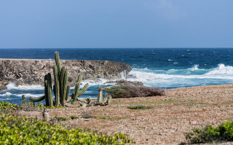 Boka Ascension cacti and coastline. Boka Ascension on the North Coast of the Caribbean Island of Curacao royalty free stock images