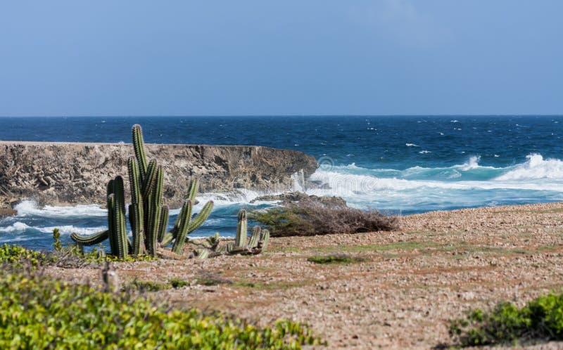 Boka uppstigningkakturs och kustlinje royaltyfria bilder