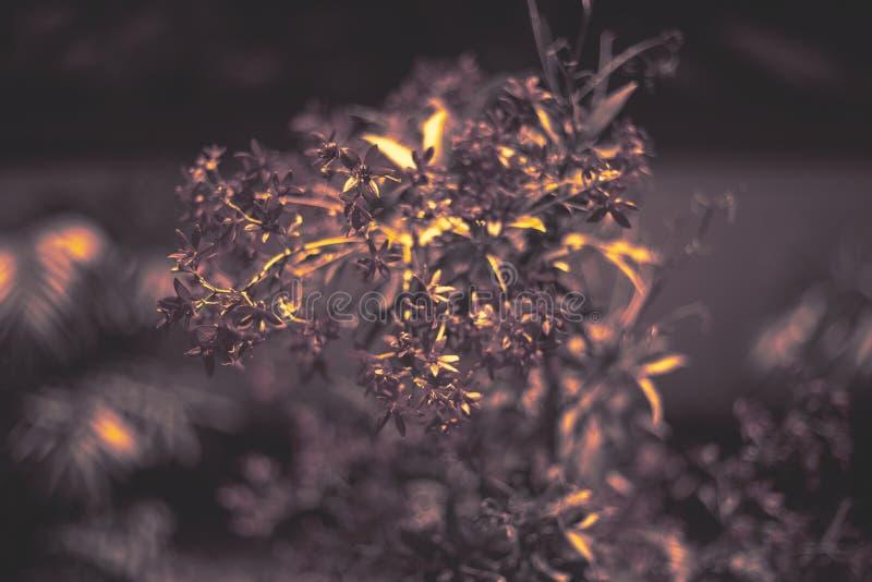 Bokeh样式自然墙纸 小野鸭颜色飞溅背景 库存图片