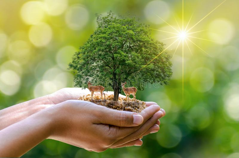 Bokeh迷离绿色背景树在生长幼木的树的手上 Bokeh绿化拿着在natur的背景女性手树 图库摄影