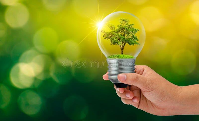 Bokeh迷离绿色背景森林和树在光 环境保护和全球性变暖p的概念 免版税库存照片