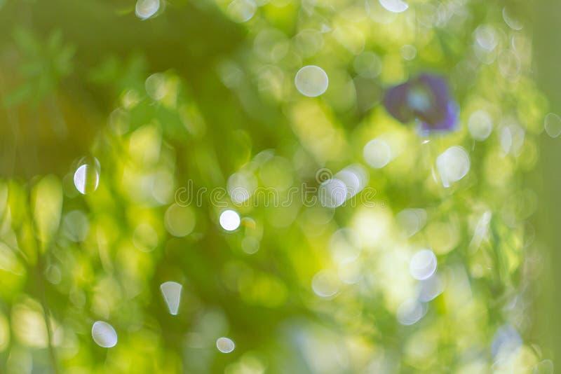 Bokeh από τα πράσινα φύλλα ως υπόβαθρο θαμπάδα φακών εστίασης στοκ εικόνα
