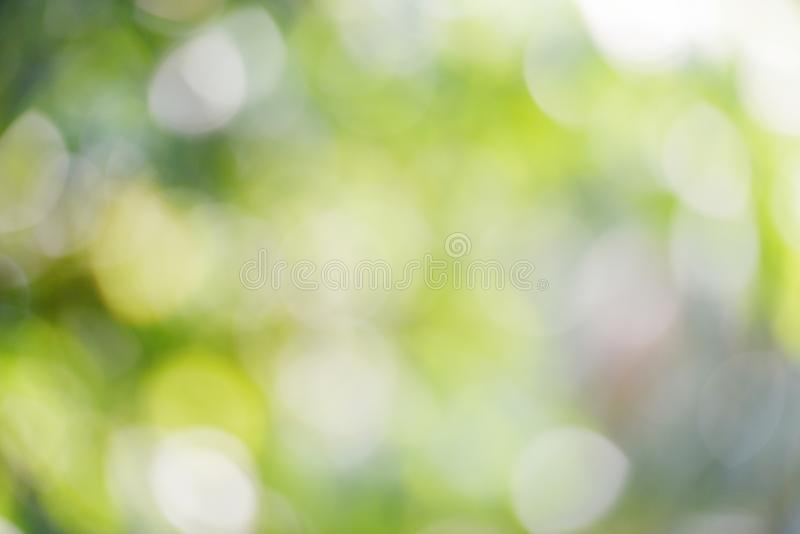Bokeh абстрактной предпосылки нерезкости зеленое из фокуса в лесе природы стоковые изображения