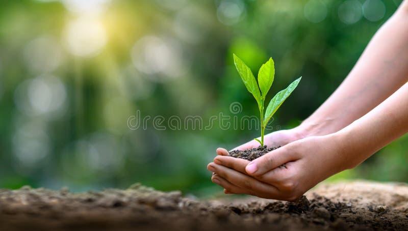 День земли окружающей среды в руках деревьев растя саженцы Дерево удерживания руки предпосылки зеленого цвета Bokeh женское на по стоковая фотография rf