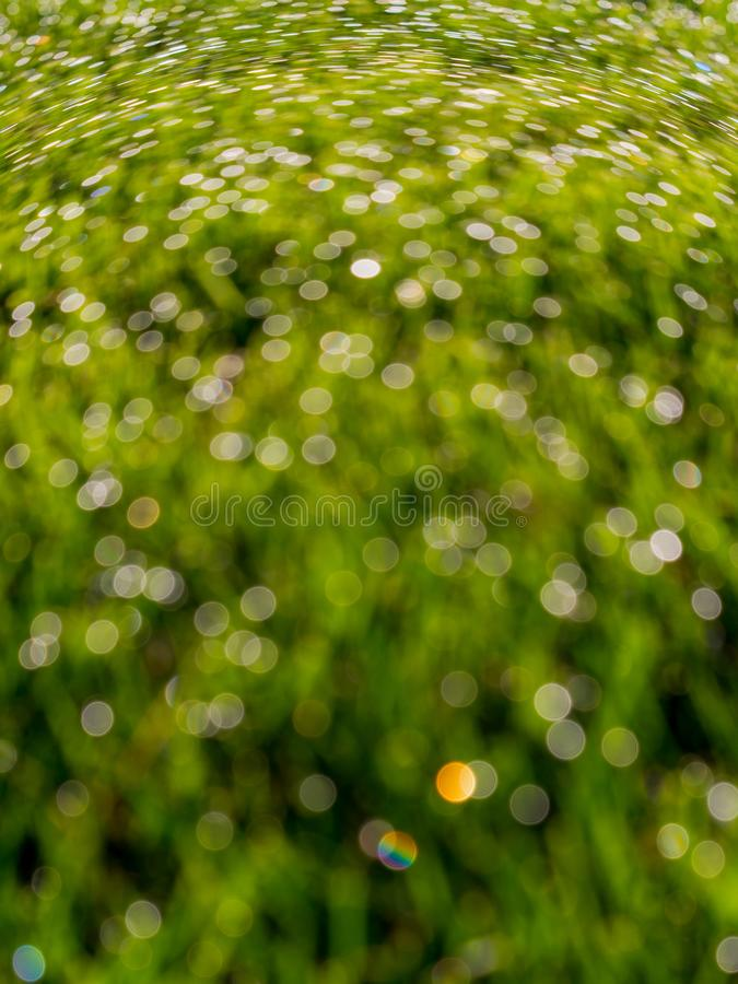 Bokeh abstrait, herbe couverte de rosée, tache floue verte tordue photos stock