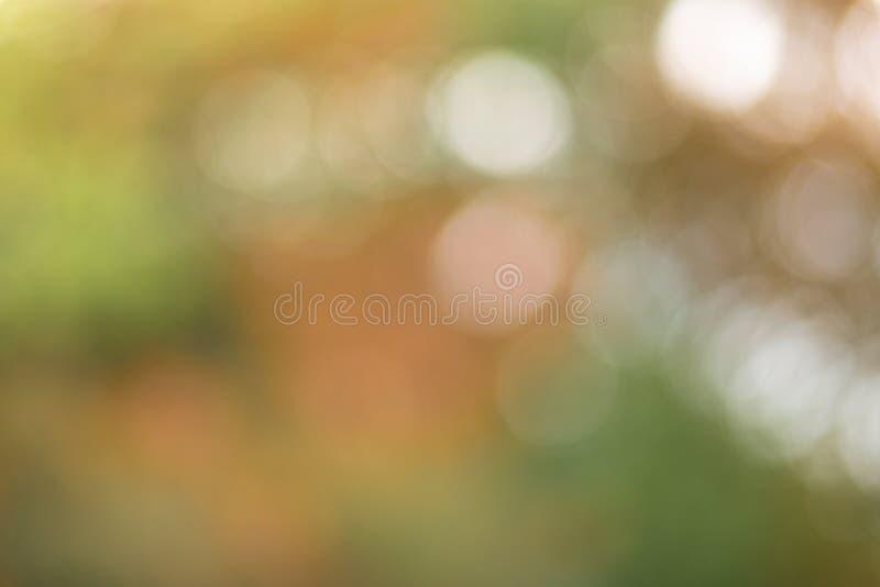 Bokeh claro fotografado através da coroa de árvores do outono foto de stock royalty free