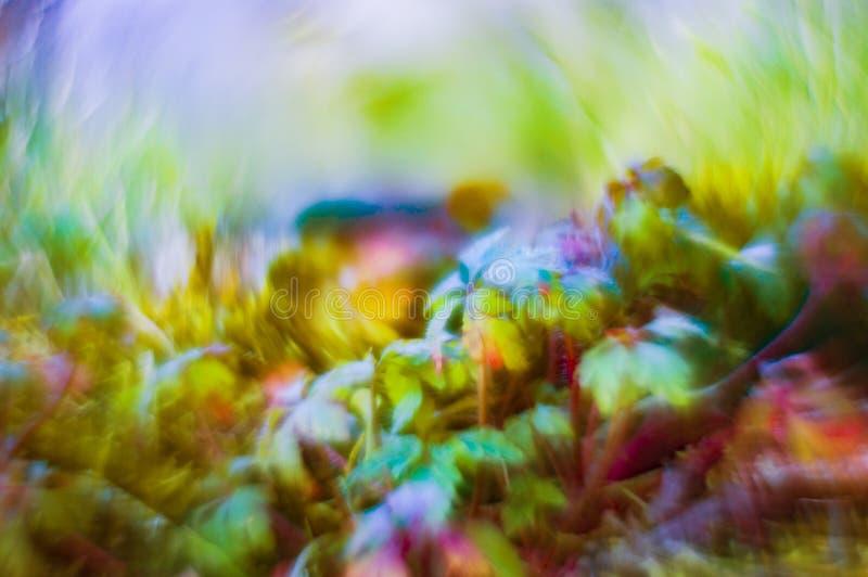 Bokeh con le piante selvatiche fotografia stock libera da diritti