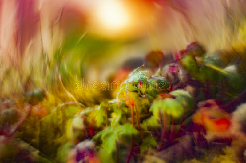 Bokeh con le piante selvatiche fotografie stock libere da diritti
