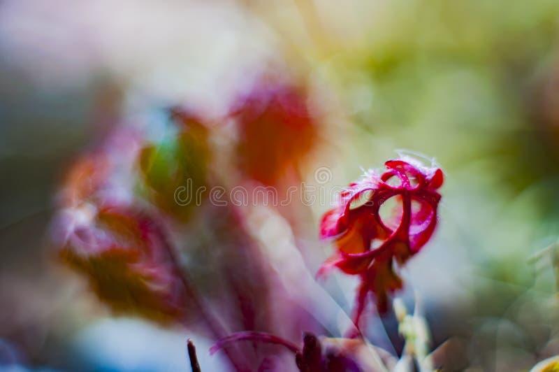 Bokeh con le piante selvatiche immagini stock