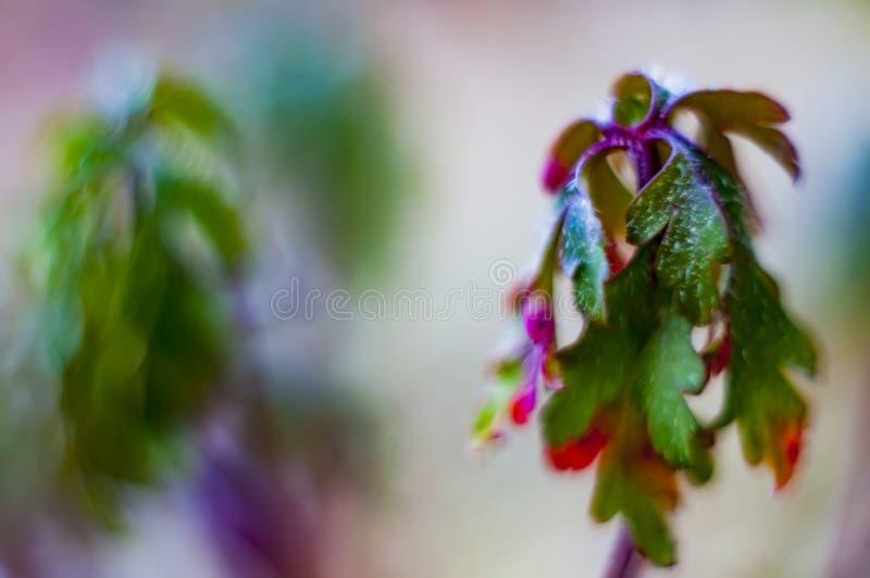 Bokeh con le piante selvatiche immagine stock libera da diritti
