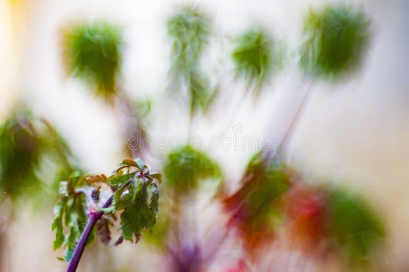 Bokeh con le piante selvatiche fotografia stock