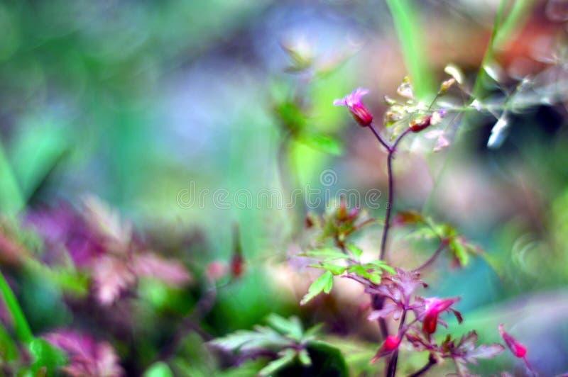 Bokeh con le piante selvatiche fotografie stock