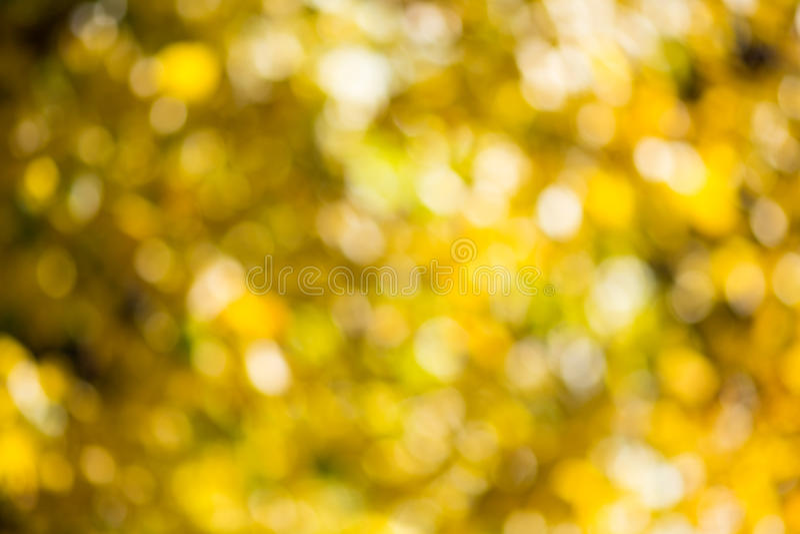 Bokeh d'automne photos libres de droits