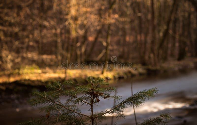 Bokeh de Forrest photos stock