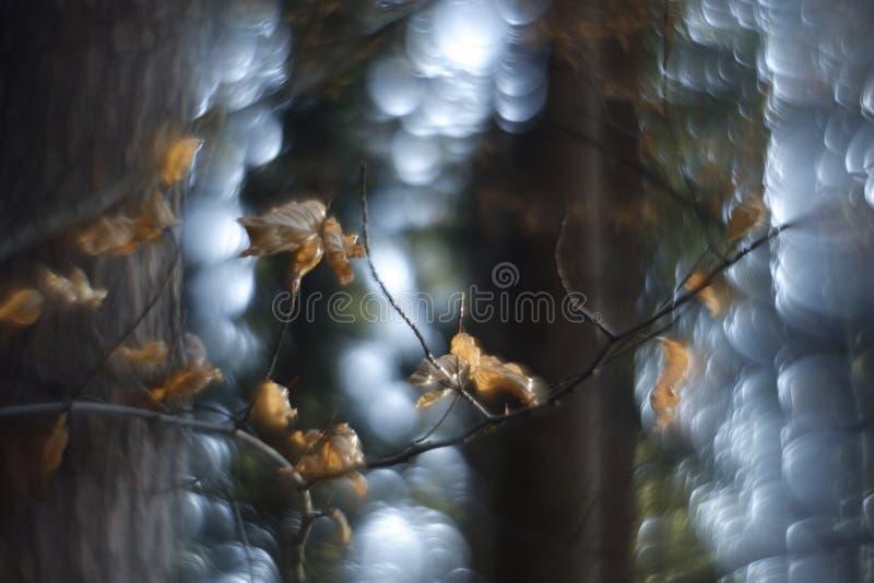 Bokeh de Swirly da floresta foto de stock
