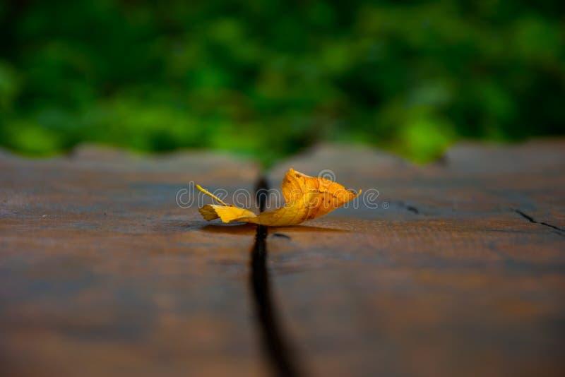 Bokeh de uma folha caída foto de stock royalty free