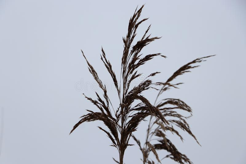 Bokeh del frío de la naturaleza de las ramas de árbol imagenes de archivo