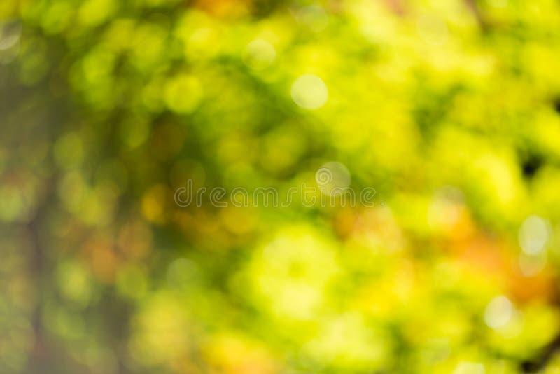 Bokeh di autunno. fotografia stock libera da diritti