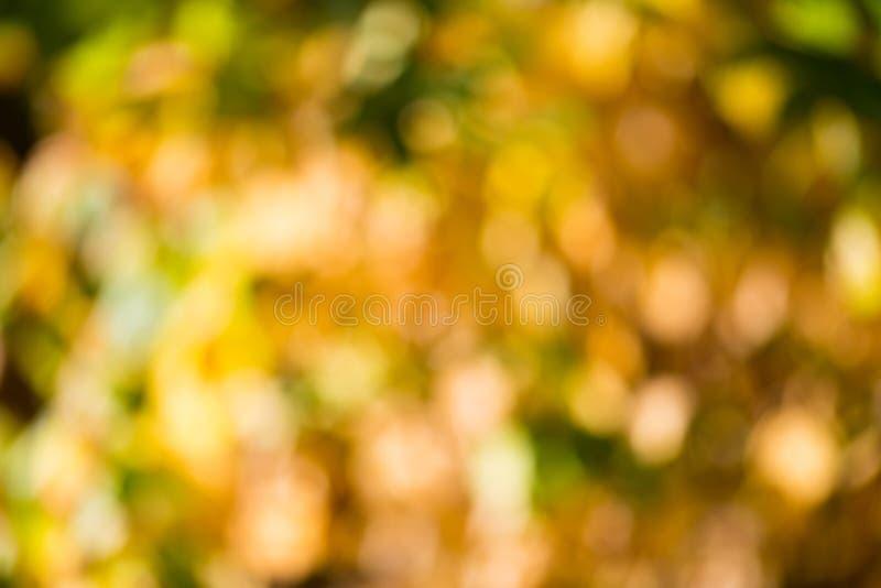 Bokeh do outono. fotografia de stock