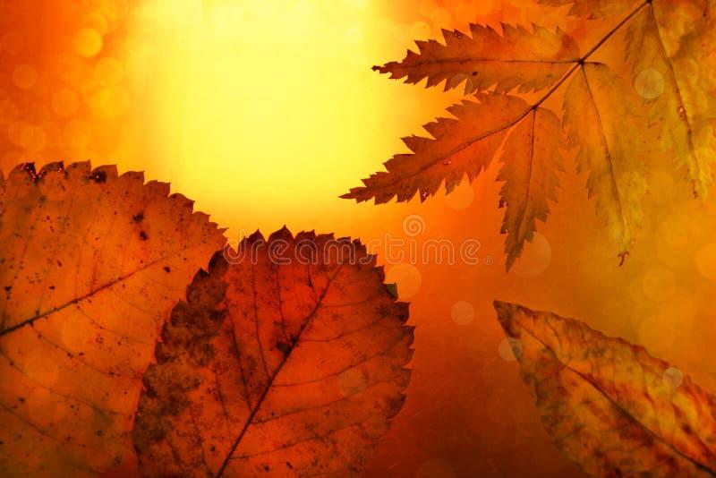 Bokeh festivo de las hojas amarillo-naranja del fondo del otoño fotografía de archivo