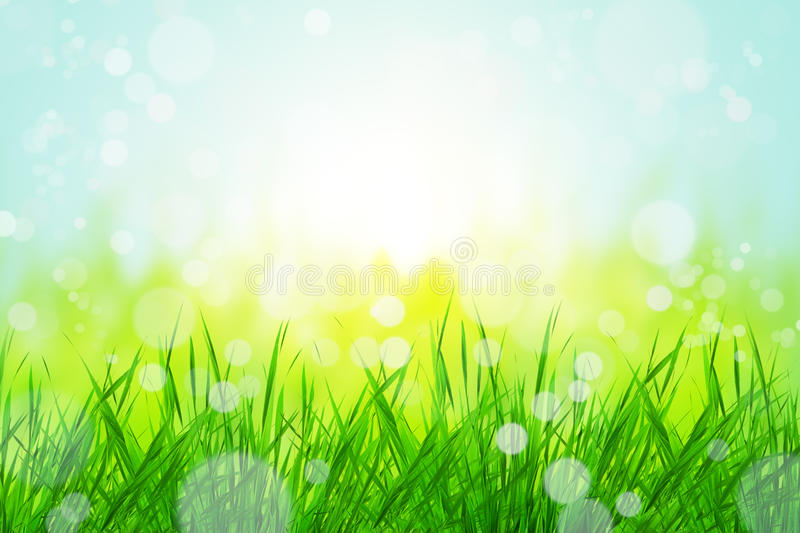 Download Bokeh with grass stock photo. Image of beautiful, flora - 20164642