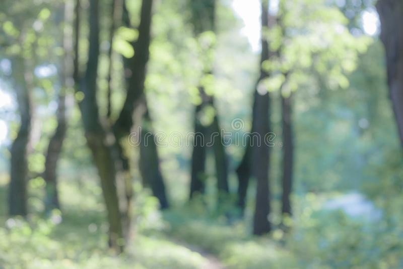 Bokeh hermoso borroso de la naturaleza fotos de archivo libres de regalías