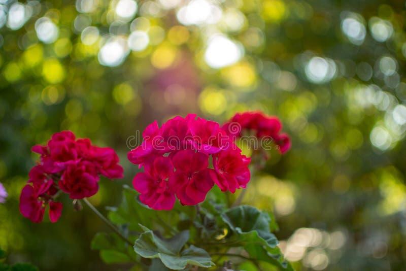 Bokeh hermoso de una flor fotografía de archivo libre de regalías