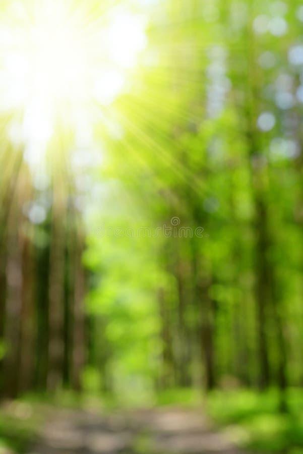Bokeh in het bos royalty-vrije stock foto's