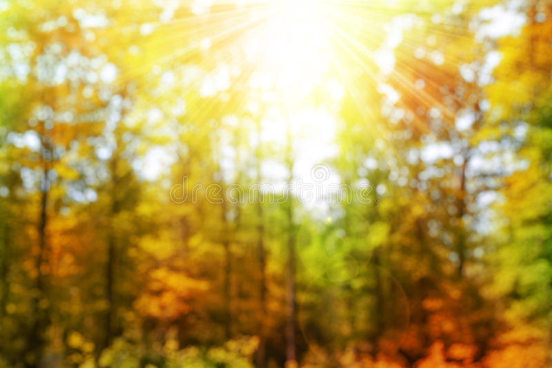 Bokeh in het de Herfstbos stock afbeelding