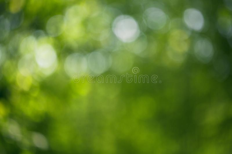 Bokeh juicy green leaves royalty free stock photos